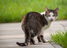 Cat Standing auf Gehweg und zurück schauen Stockbild