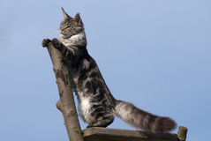 Cat standing on branch Stock Photography