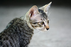 A cat. Stock Images