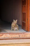 Cat standing at the door Royalty Free Stock Photography