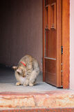 Cat standing at the door Royalty Free Stock Image