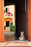 Cat standing at the door Royalty Free Stock Images