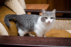 Cat standing on four legs Stock Photo