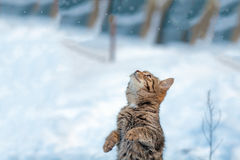 Cat standing on hind legs Royalty Free Stock Image
