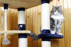 Cat standing in a huge cat-house. Gray cat standind in a huge cat-house Stock Images