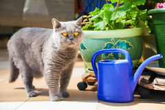 Cat standing near the blue watering-pot Royalty Free Stock Photo