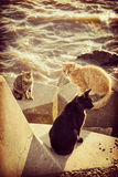 Cat standing on pier next to ocean coast on summer. Group of wild homeless cats sitting on harbor stones at ocean water coast, summer vacation stock photography