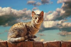 Cat on the roof. Cat standing on the roof before the storm - beautiful lit by the setting sun stock images