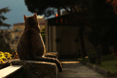 Cat standing on stone fence. Shot taken in Naples, in San Martino National museum. The cat was looking at the scenery Royalty Free Stock Image