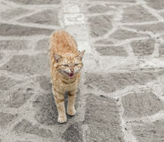 Cat standing on stone floor. Royalty Free Stock Photography