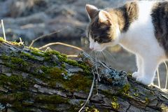 Cat standing on tree Stock Photography