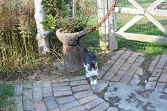 Cat Standing On um trajeto do tijolo imagem de stock