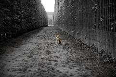 The Cat of Versailles Royalty Free Stock Photos