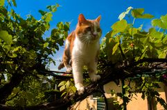 Cat standing on a vine plant royalty free stock photo