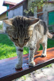 Cat standing on wooden bench Royalty Free Stock Images