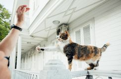 The cat stands on the fence and raises his paw on the man`s hand royalty free stock photography