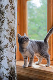 Cat stands on windowsill Royalty Free Stock Image