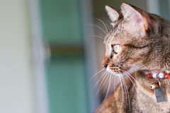 Cat Stare Posting Stock Image