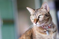 Cat Stare Posting Stock Image
