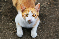 A cat stare at someone. Stock Photo