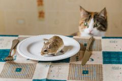 Cat stares at little gerbil mouse on the table. Concept of prey, food, pest. Stock Photo