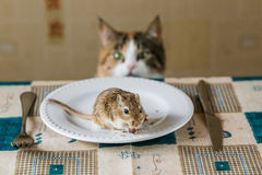 Cat stares at little gerbil mouse on the table. Concept of prey, food, pest. Stock Photos