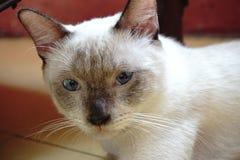 Cat Staring imágenes de archivo libres de regalías