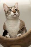 Cat Staring imagenes de archivo