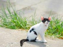 Cat Staring Lizenzfreies Stockfoto