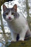 Cat staring at camera. Gray and white domestic cat staring at camera Stock Photo
