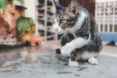 Cat staring on the concrete floor.  Stock Photography