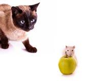 Cat staring at rat Royalty Free Stock Photography
