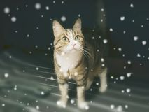 Cat. Staring in the snow Royalty Free Stock Photography