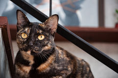 Cat staring from the stairs. Black and brown Cat staring from the stairs Stock Images