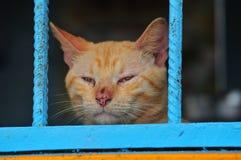 Cat Staring ut ett fönster Arkivfoton