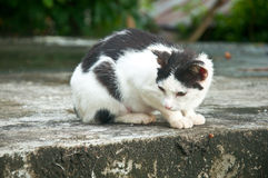Cat staring wary at the street. Black-an-white alley cat staring wary at the street Royalty Free Stock Images
