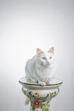Cat staring on white Stock Photography