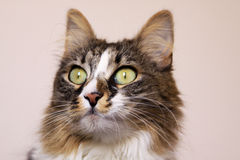 Cat staring with wide opened eyes stock photo