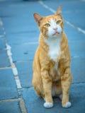 Cat starring at camera Stock Photos