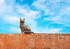 Cat statue Stock Photos