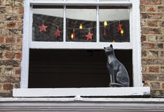 Cat Statue i York Royaltyfri Foto