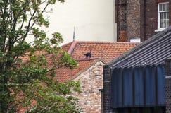 Cat Statue i York Fotografering för Bildbyråer