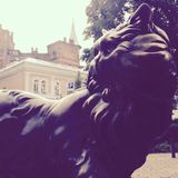 Cat Statue in Kyiv, Ukraine Royalty Free Stock Photography