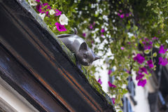 Cat Statue in York. One of the decorative cat statues that are placed on numerous buildings in York, England stock images