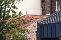 Cat Statue in York Stock Image