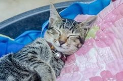 Cat stay on the bed Royalty Free Stock Photos