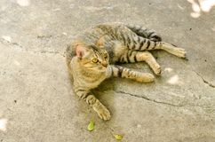 Cat stay on the concret street Royalty Free Stock Photography