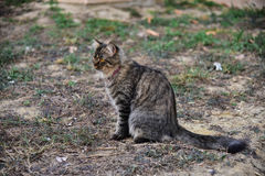 A cat stay. Ing on grass Stock Photo