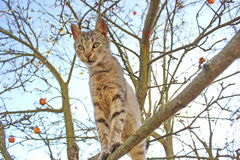 Cat staying on branch of tree Stock Images