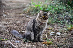 Cat staying on ground. And see anything Royalty Free Stock Photography